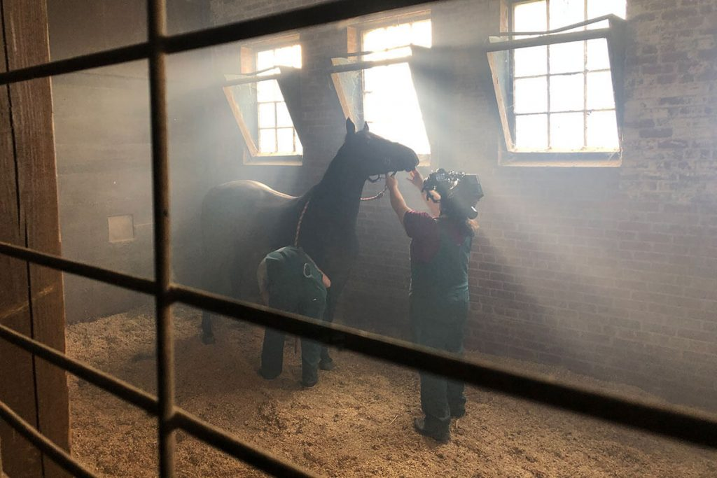 Camera operator filming horse in a stable
